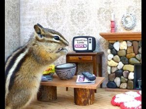 A chipmunk is eating in human's house.