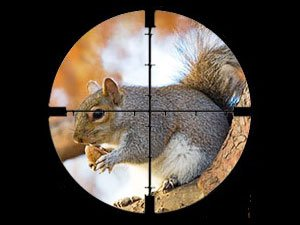 Aiming sight for a ground squirrel.