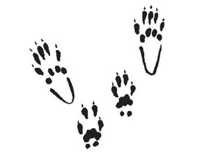 Several squirrel tracks on white background.