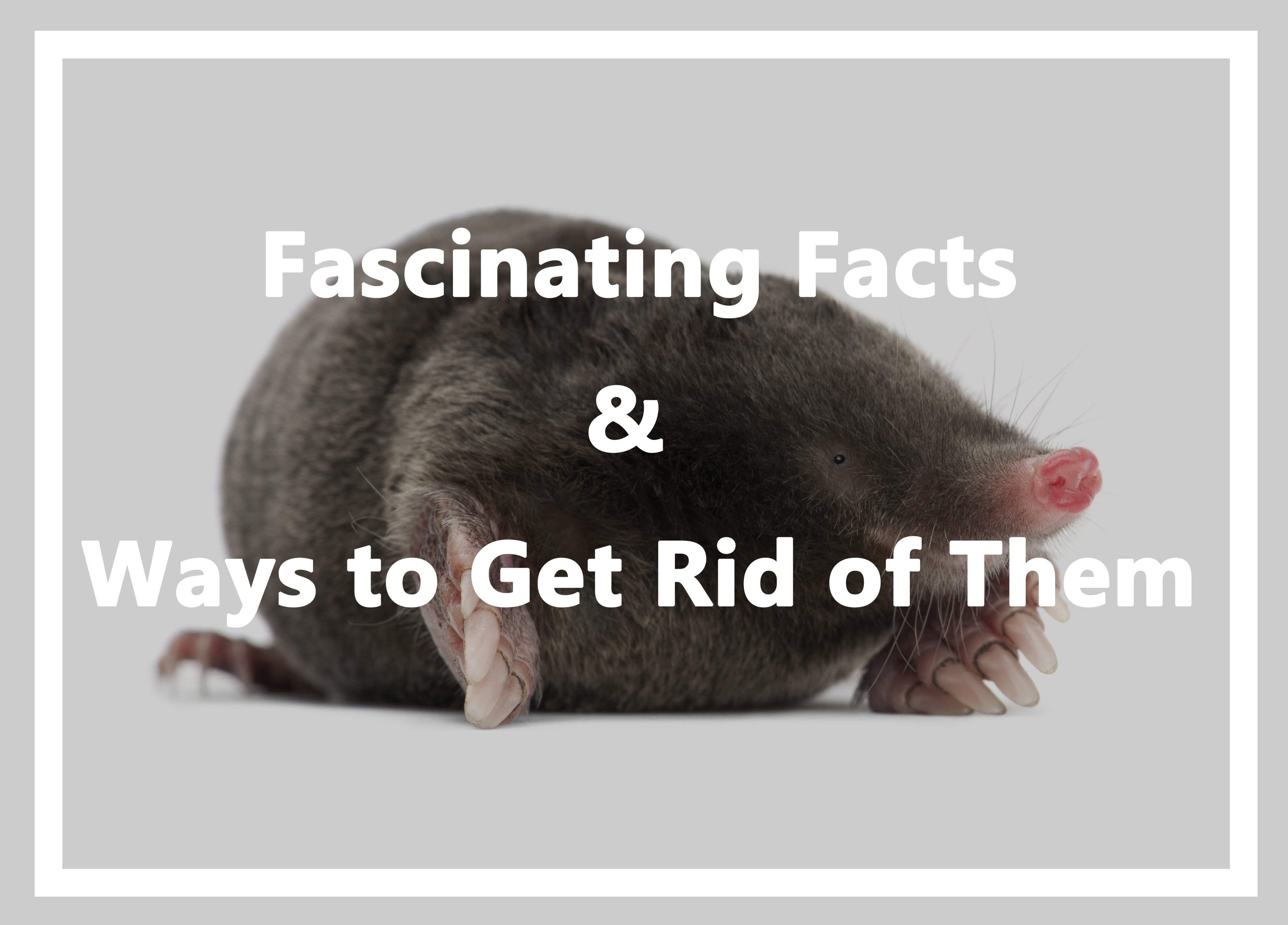 Why do moles interfere? Fighting them 34