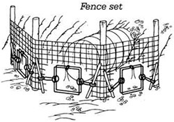 A fence set for beavers.