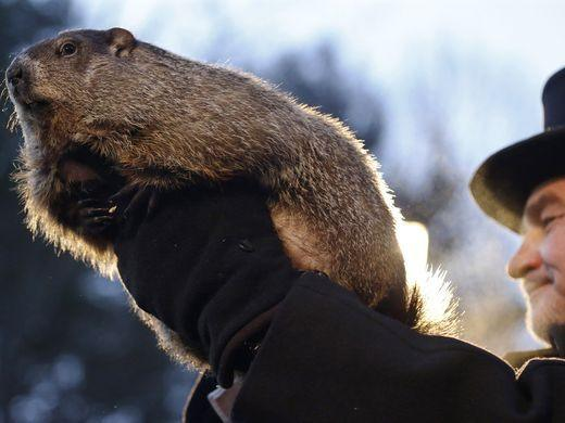 Man holding a groundhog in hands