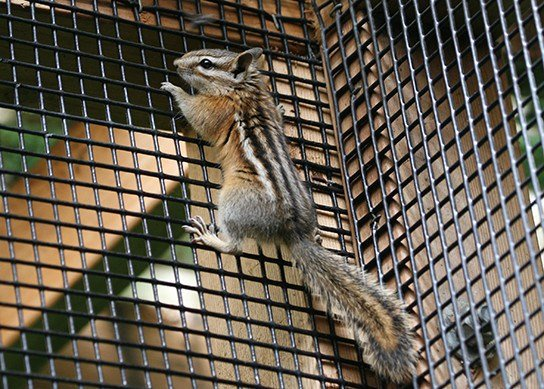 Preventing squirrel for climbing