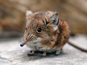 Cute shrew on rock