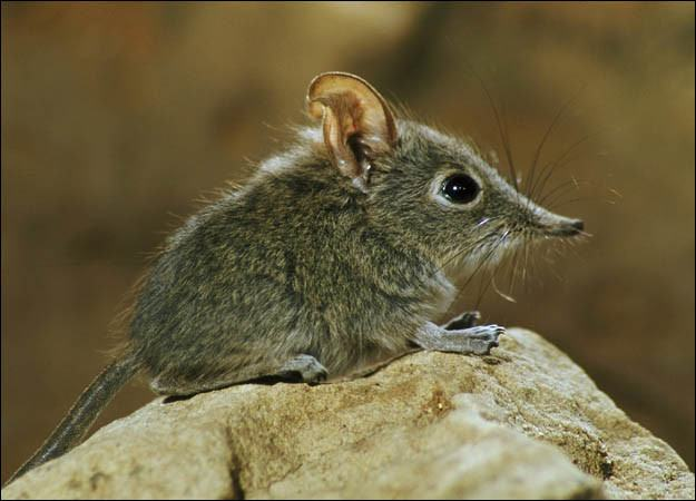 Shrew: 15 Surprising Facts & How to Get Rid of Them - Pest Wiki