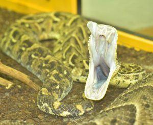 Snake on floor