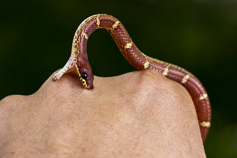 Snake biting hand