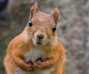 A squirrel with wide opened eyes