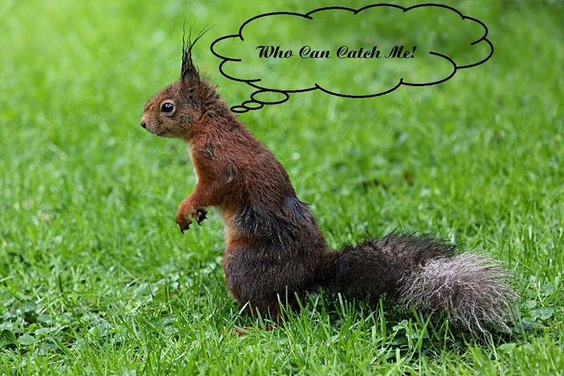"""Squirrel says""""who can catch me"""""""
