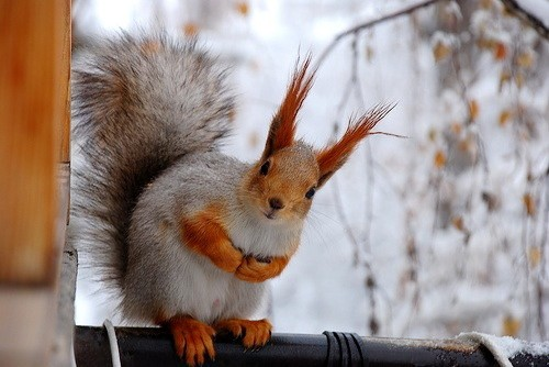 A beautiful squirrel in nature.