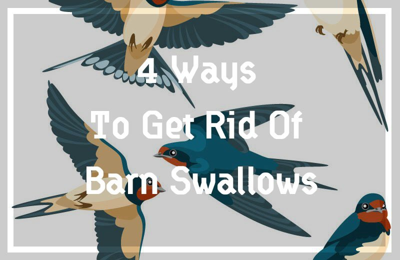 Swallow: Complete Guide & Top 3