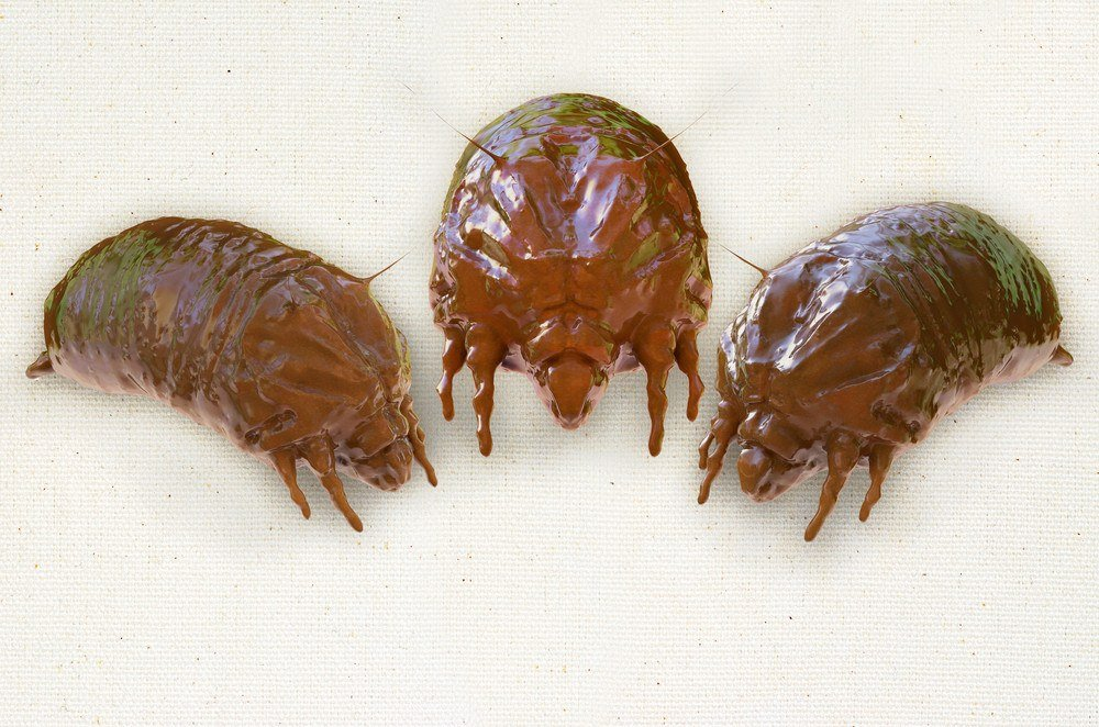 Facts About Dust Mite Bites Plus Differences From Bed Bug Pest Wiki