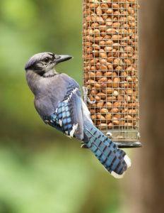 Hanging bird feeder with seeds in garden