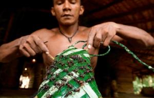 Amazonian bullet ant ritual