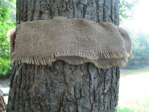 Use burlap folded strips to control Gypsy moths