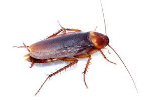 Cockroach on the white.