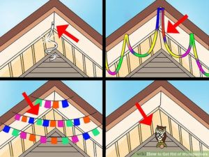Hanging colorful stuff on roof to scare woodpecker away