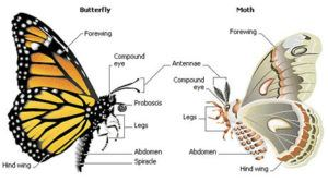 Structure differences of moth and butterfly