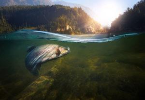 Close-up shut of a fish hook under water.