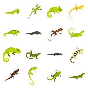 Flat lizard icons set on the white.