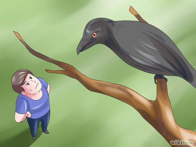 Man looking at a crow on tree worried