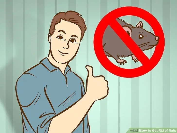How to Get Rid of Rats Naturally? (14 Home Remedies) - PestWiki