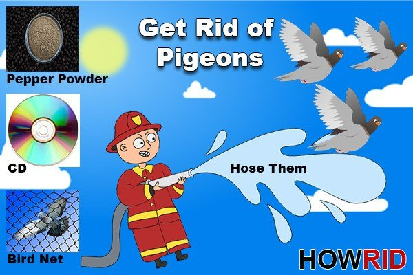 Get Rid of the Pigeons: 14 Home Solutions and Four Precautionary Measures - Pest Wiki