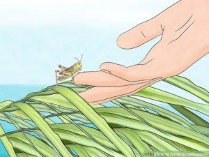Hand touching a grasshopper