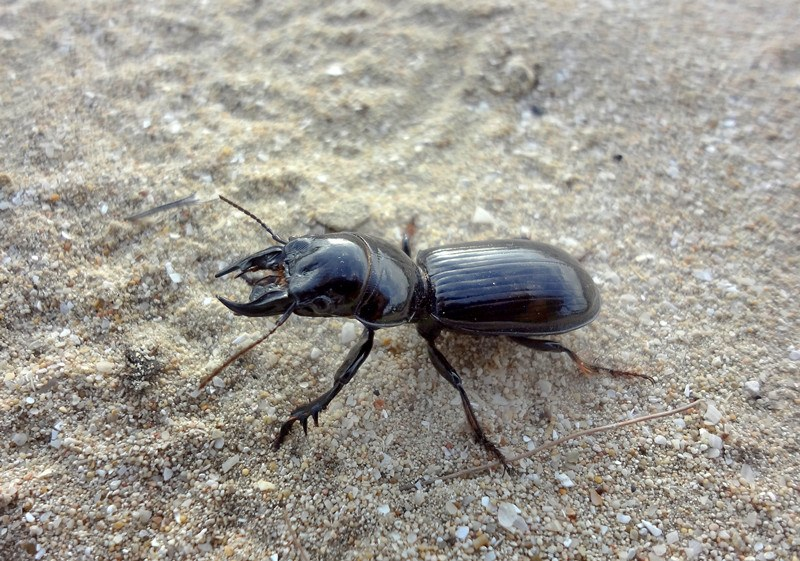 Ground Beetles: Basic Facts and How to Get Rid of Them