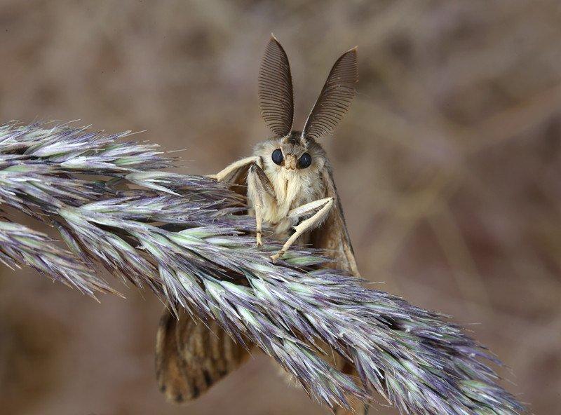 Gypsy moth on branch