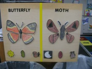 Handwork of moth and butterfly