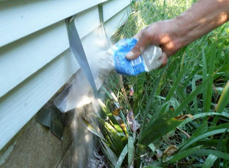 Using insecticide dust to get rid of Tarantula hawk