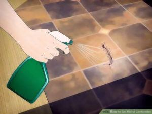 Get rid of centipede in house