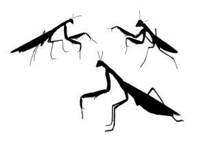 Praying mantis shadow cartoon on white background