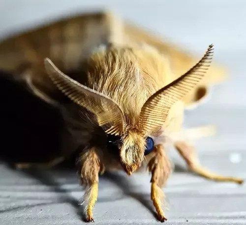 Moth head