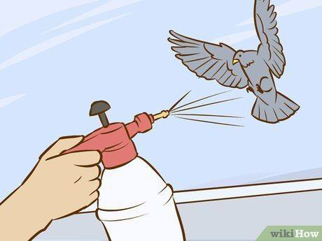 Solutions to Get Rid of Pigeons