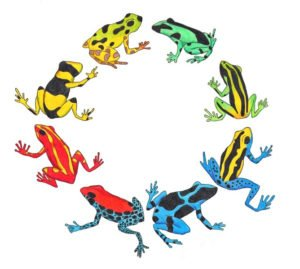 Poison dart frogs in a circle on the white.