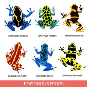 Set of different poisonous frogs