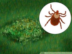 Ticks in garden