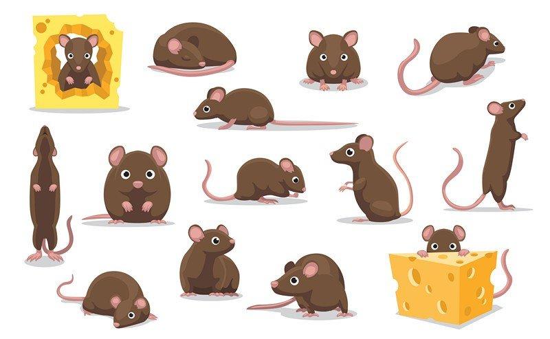 Cute Brown Rat Various Poses Cartoon