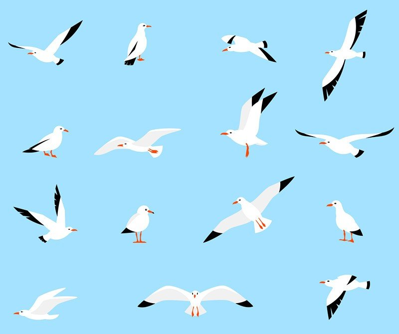 Set of beautiful seagulls in a flat style