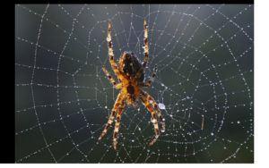 Close up spider web