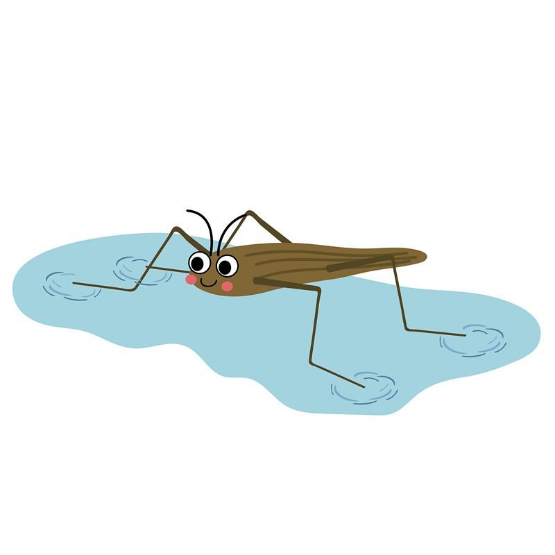 Water strider walking on water cartoon