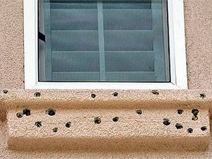 Damage outside the window caused by woodpeckers