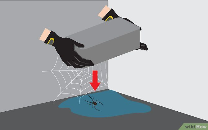 Kill Spiders Fast in 3 Easy Steps
