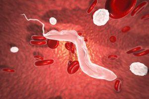 Sleeping sickness parasites