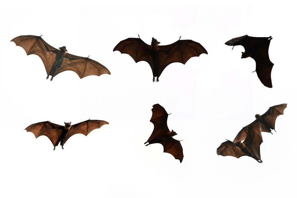 Home Remes To Get Rid Of Bats