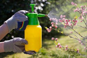 Woman with gloves spraying a blooming plants