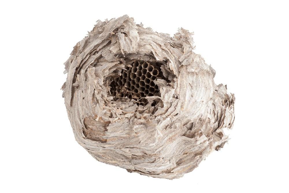 Wasp nest isolated on white background.