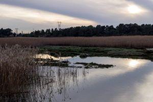 Estuary wet area